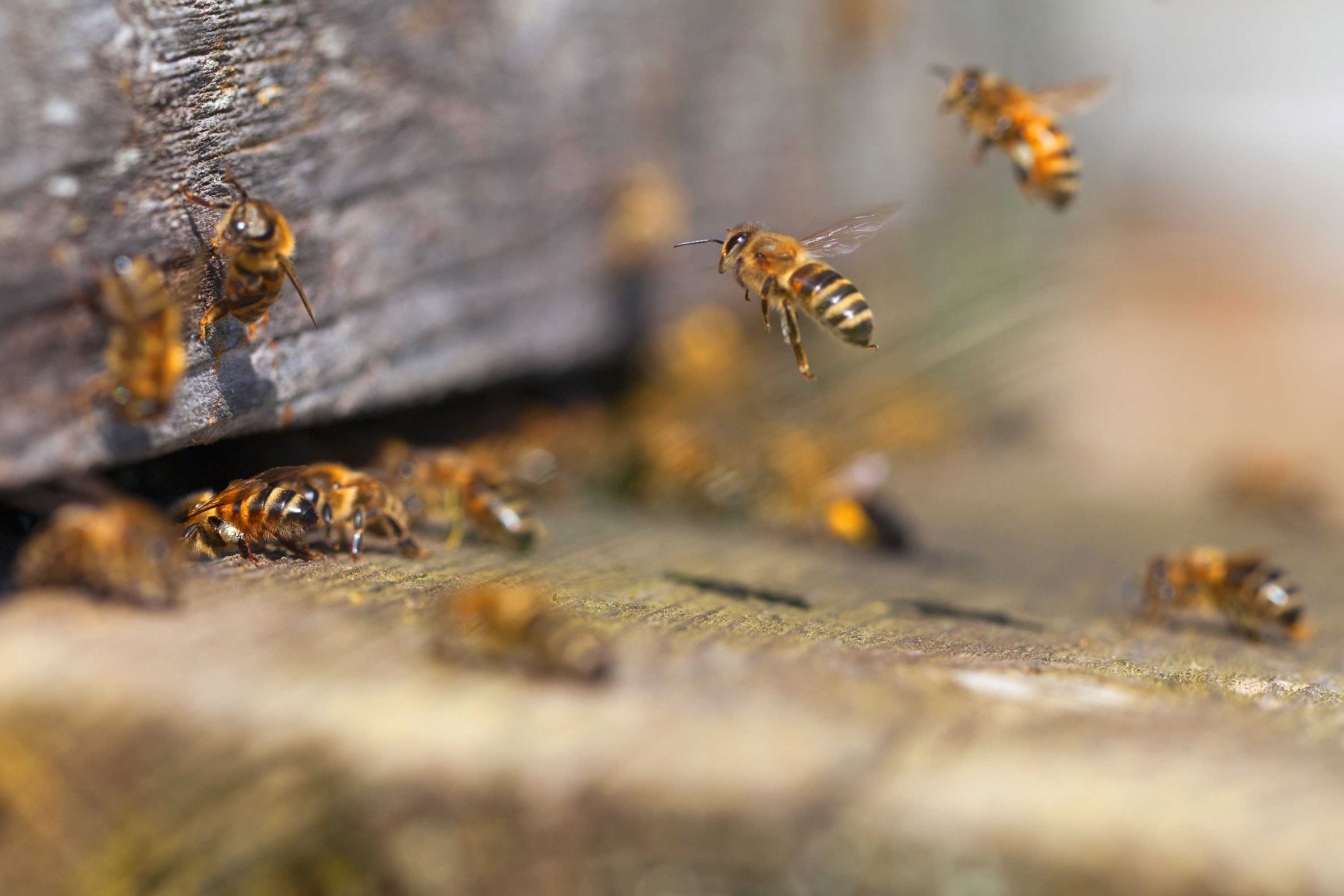 bee exterminators connecticut