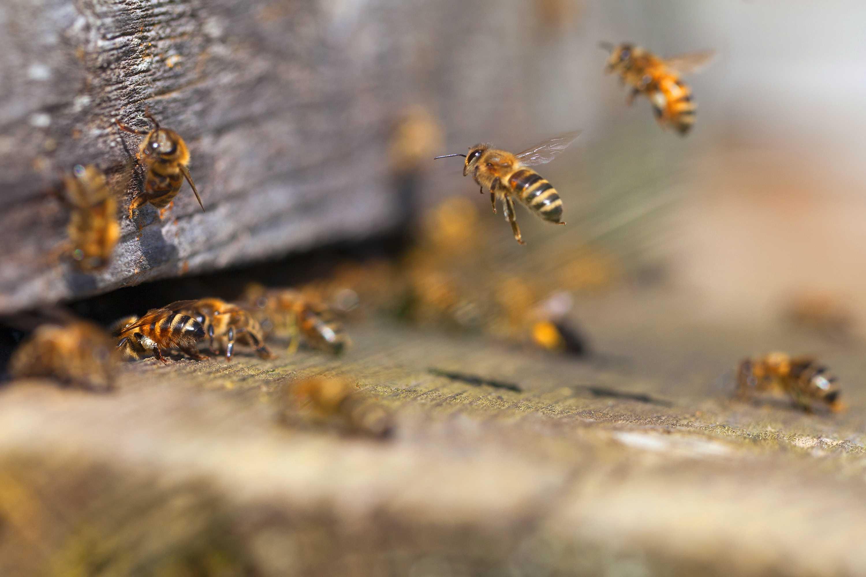 bee exterminators connecticut