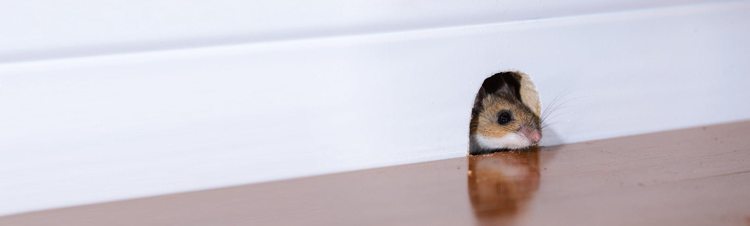 mice exterminators ct